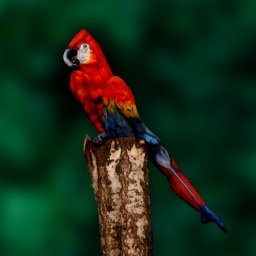 Parrot Perspectives