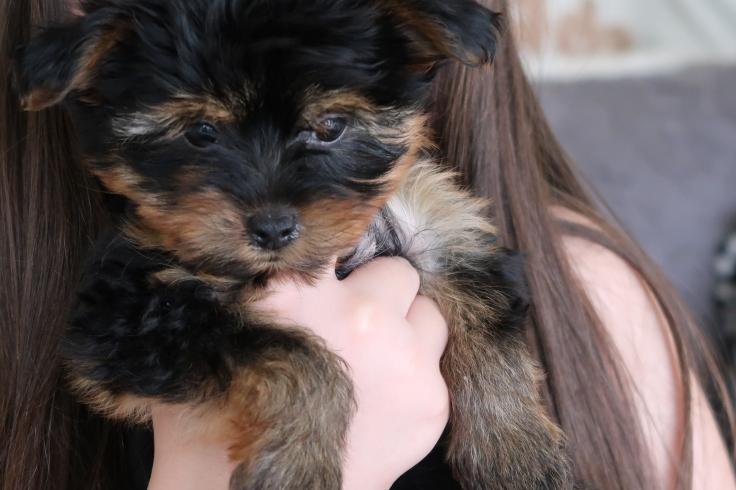 Puppy July 16