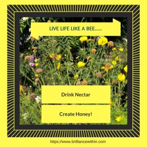 live-life-like-a-bee